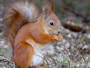 Regione liguria biodiversit scoiattolo rosso ue domani for Eventi piemonte domani