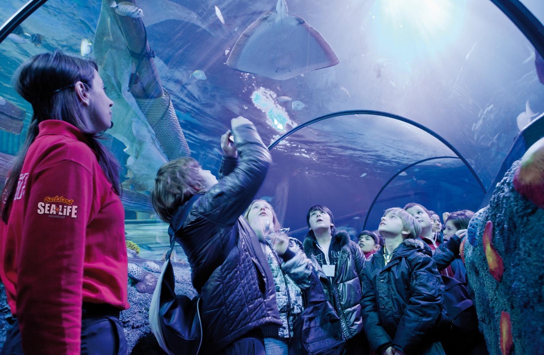 Sea Life Gardaland : Gardaland SEA LIFE Aquarium alla Fiera di Genova dal 14 al 16 novembre ...