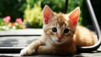 gatti-cuccioli-2